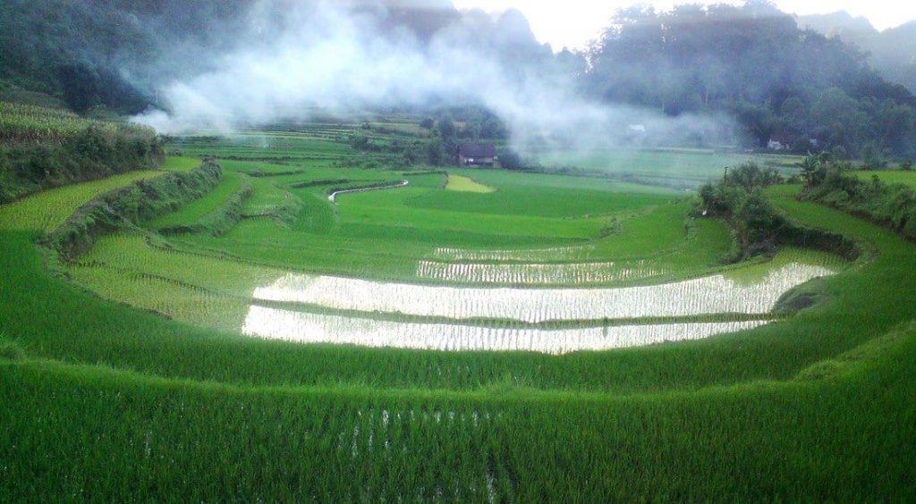 Terraced rice paddy fields, Vietnam