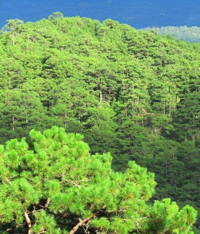 Weather, colours & foliage change towards the mountains
