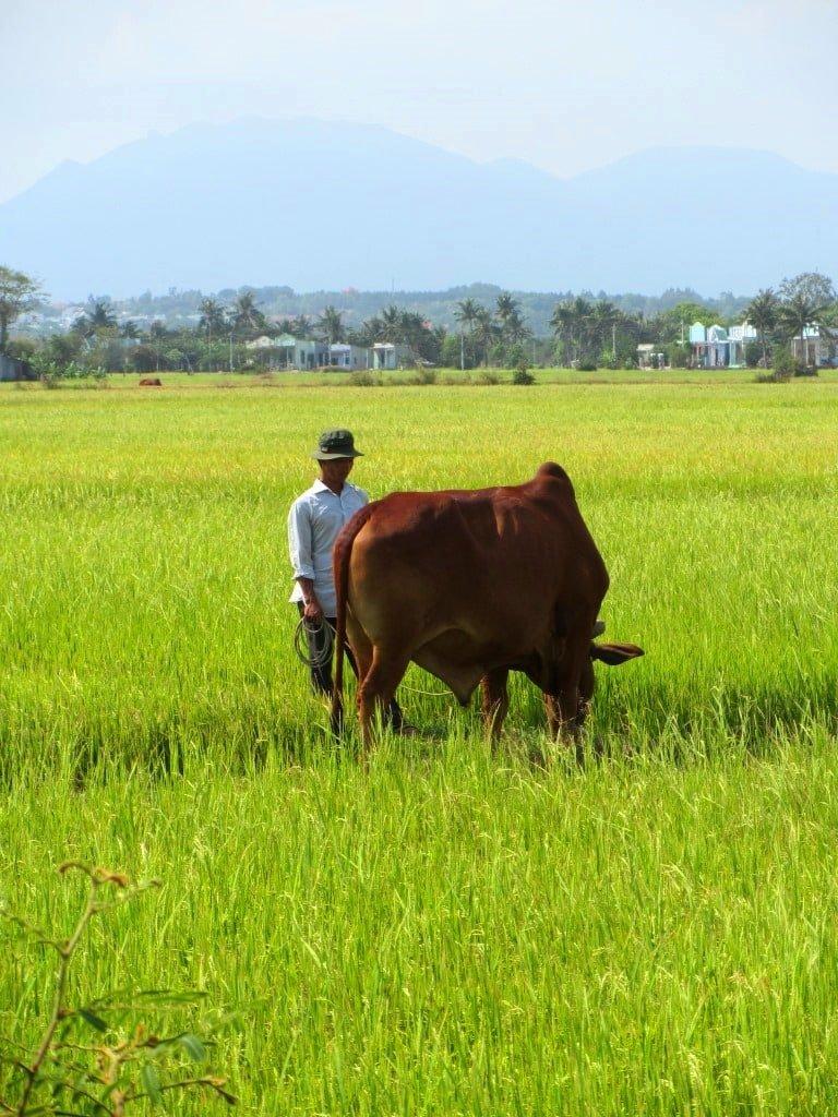 Hello, rural Vietnam