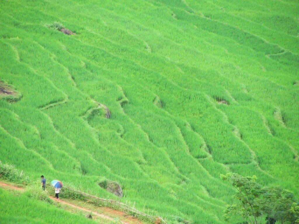 Classic shot: terraced rice fields