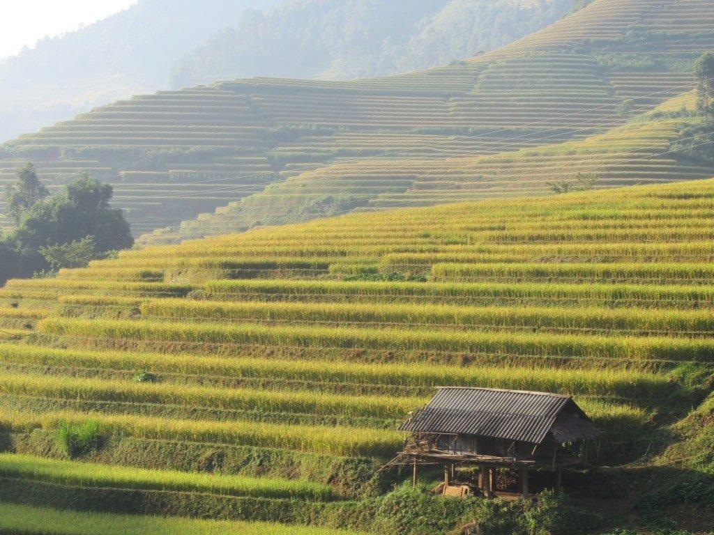 The 'rice show' at Mu Cang Chai