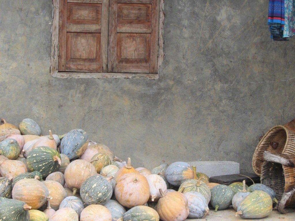 Pumpkins & a stone house