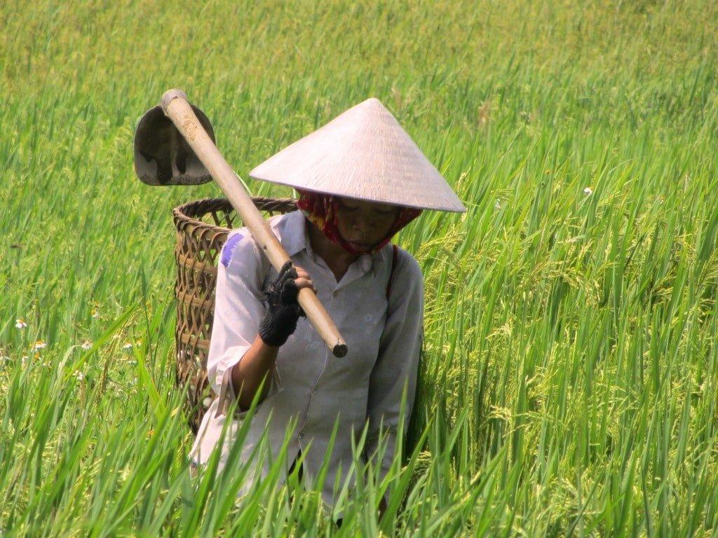Work begins in the fields