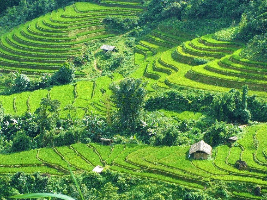 Rice terraces on Road DT177, Hoang Su Phi, Ha Giang, Vietnam