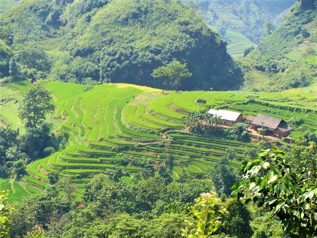 Rice terraces & hamlet, Lao Cai Province, Vietnam