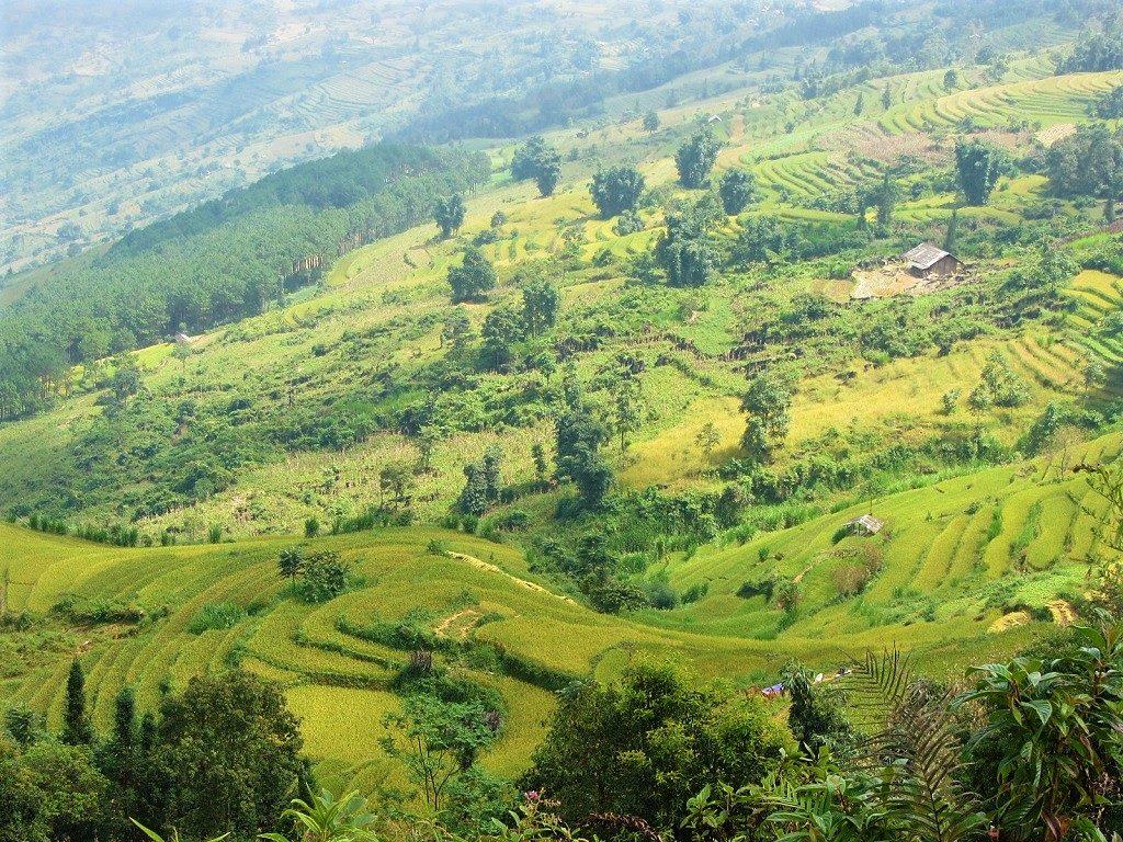 Rice terraces near Xin Man, northern Vietnam