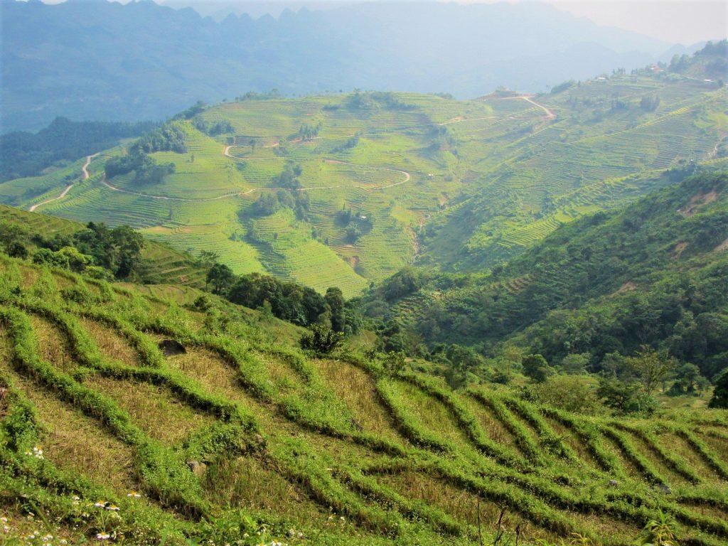 Terraced rice fields, Lao Cai Province, Vietnam