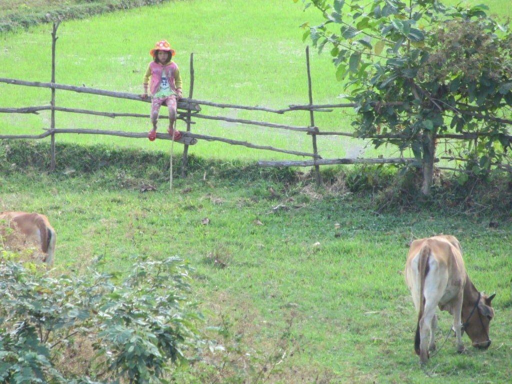Cowherd, Ninh Thuan Province, Vietnam