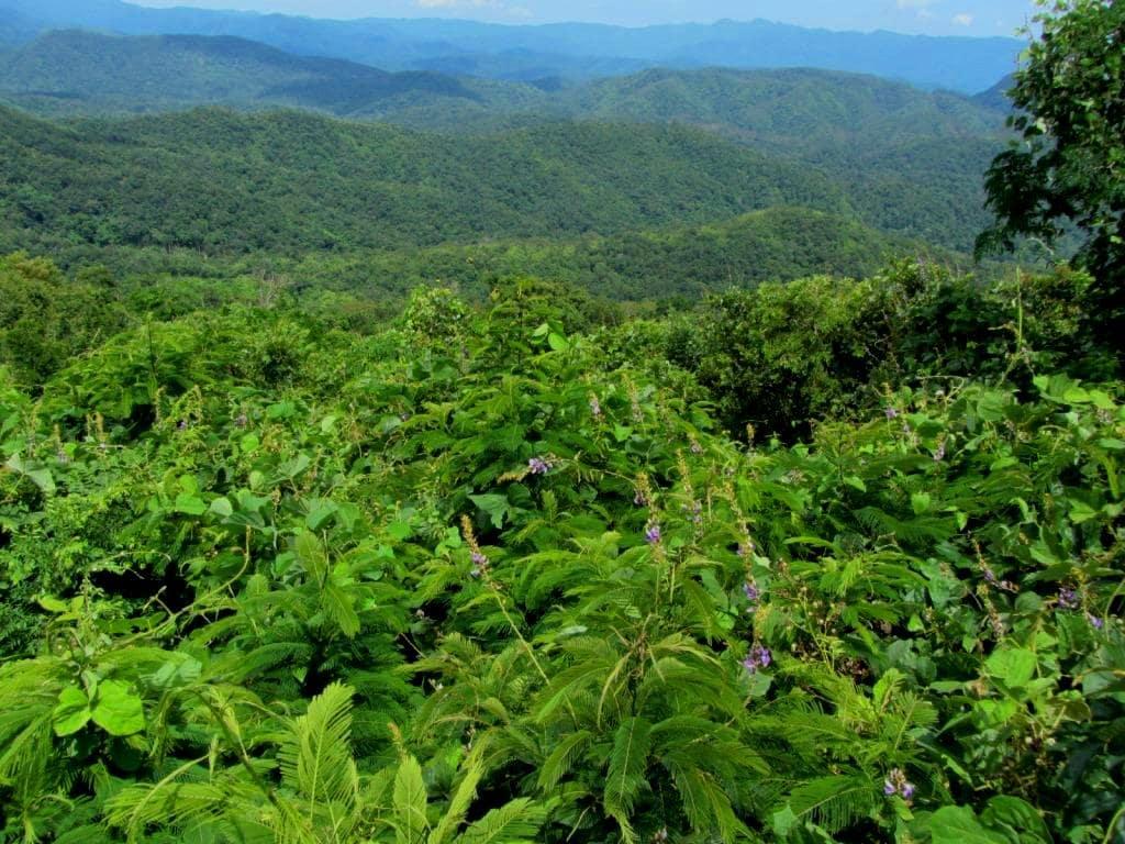 The jungle canopy on the road from Dalat to Mui Ne, Vietnam