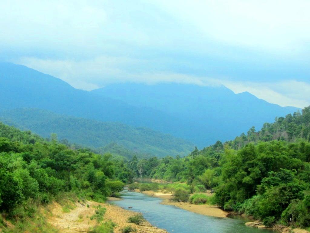 Cinnamon tree lining a river in Central Vietnam, near Hoi An
