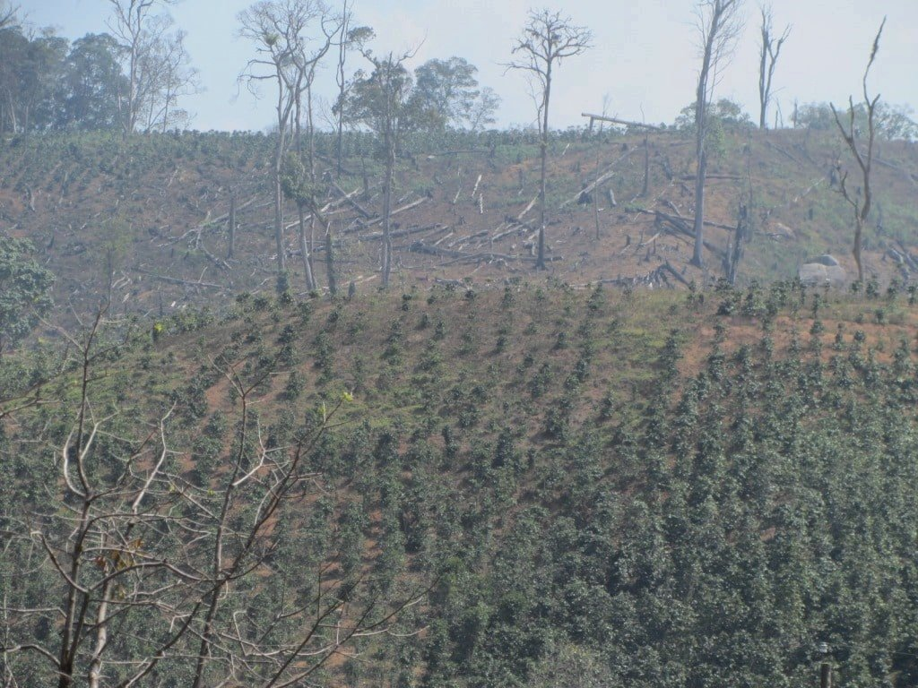Forest cleared for agriculture, Dalat, Vietnam