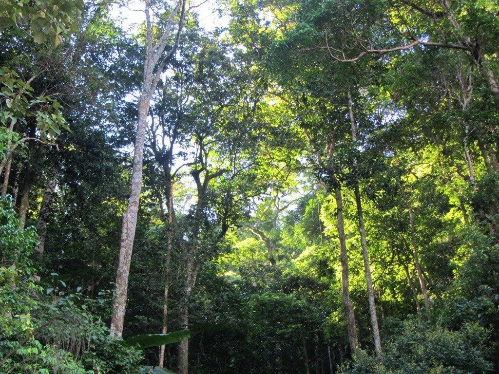 Jungle canopy, Phong Nha Ke Bang National Park, Vietnam