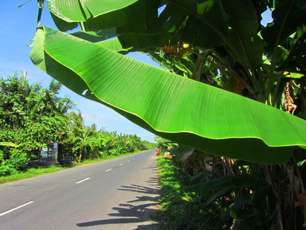 A lush back-road, Mekong Delta, Vietnam