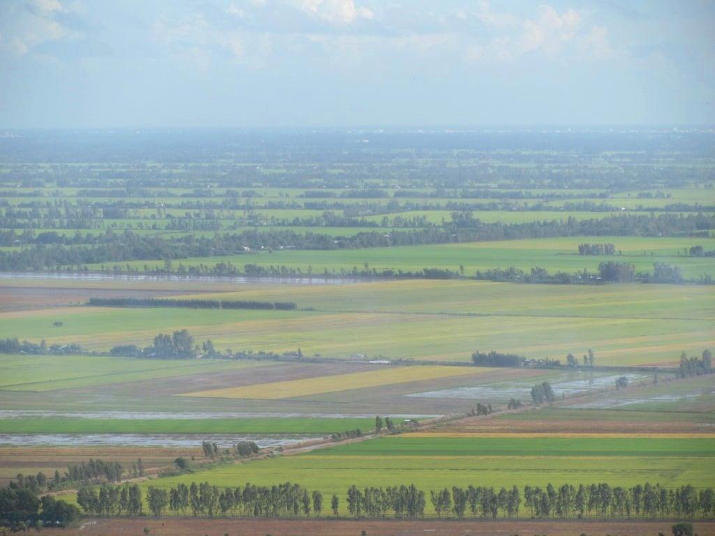 Rice fields, An Giang Province, Mekong Delta, Vietnam