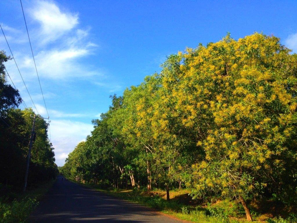 Ho Coc forest, Vietnam