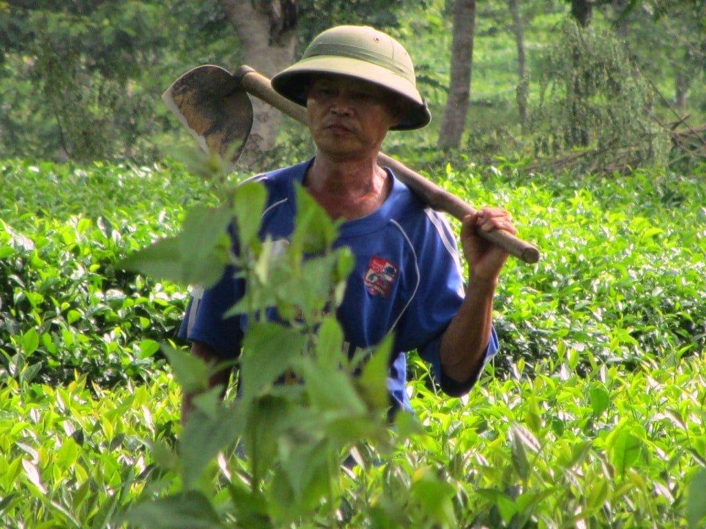 Pith helmeted farmer in northern Vietnam