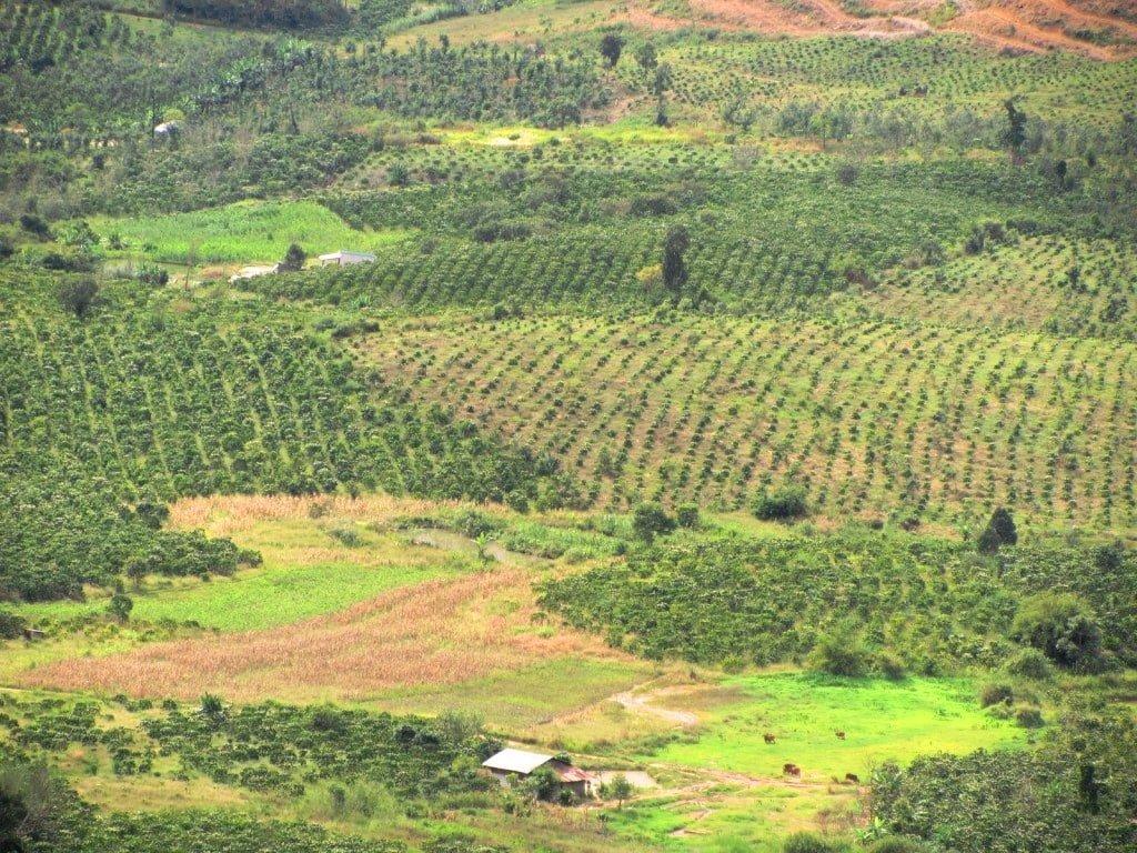 Coffee plantations, Di Linh, Vietnam