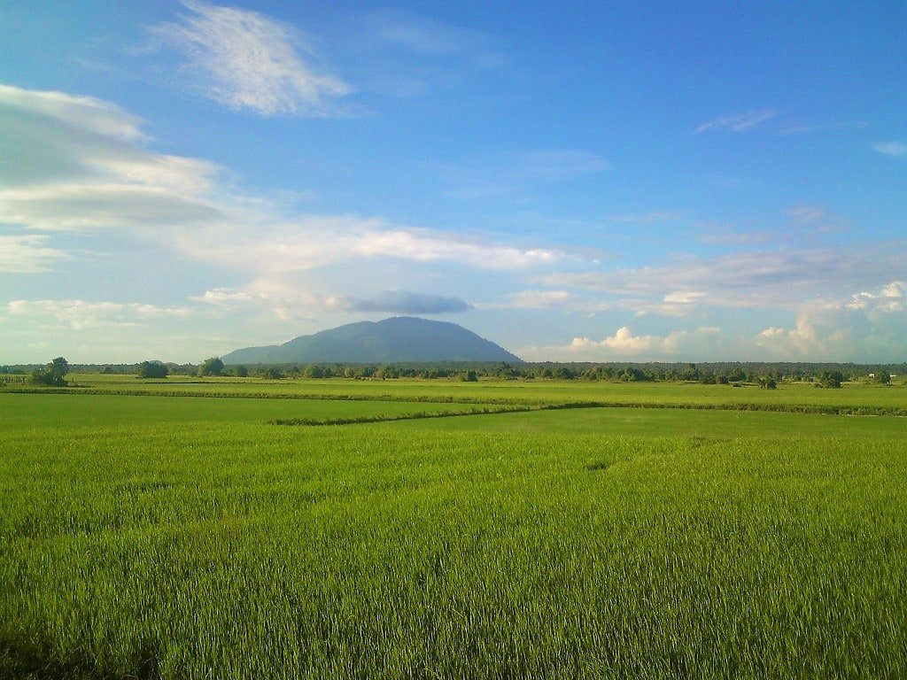 Rice fields on the Ocean Road, Vietnam