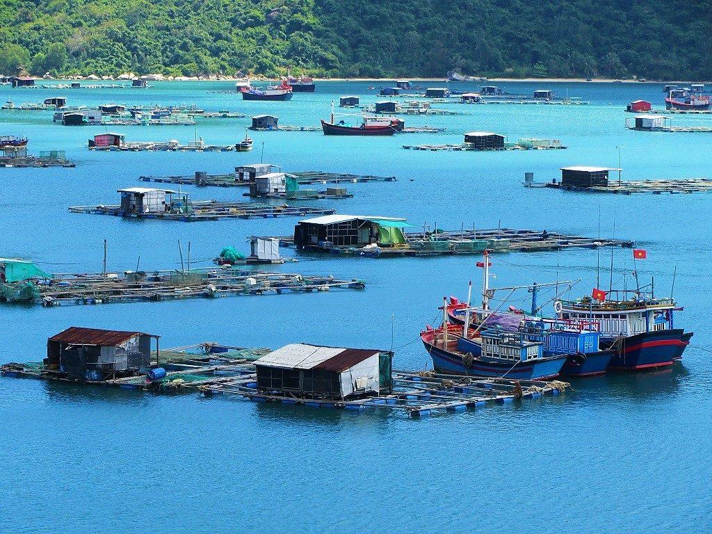 Floating fish farms on Vung Ro Bay, Vietnam