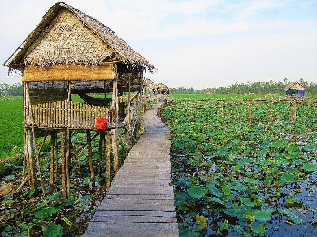 Floating Lotus Lake Homestays, Dong Thap Province, Mekong Delta