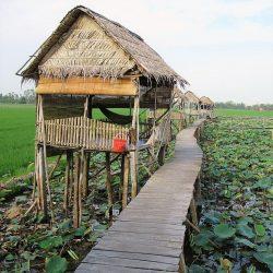 Floating Lotus Lake Homestays, Mekong Delta
