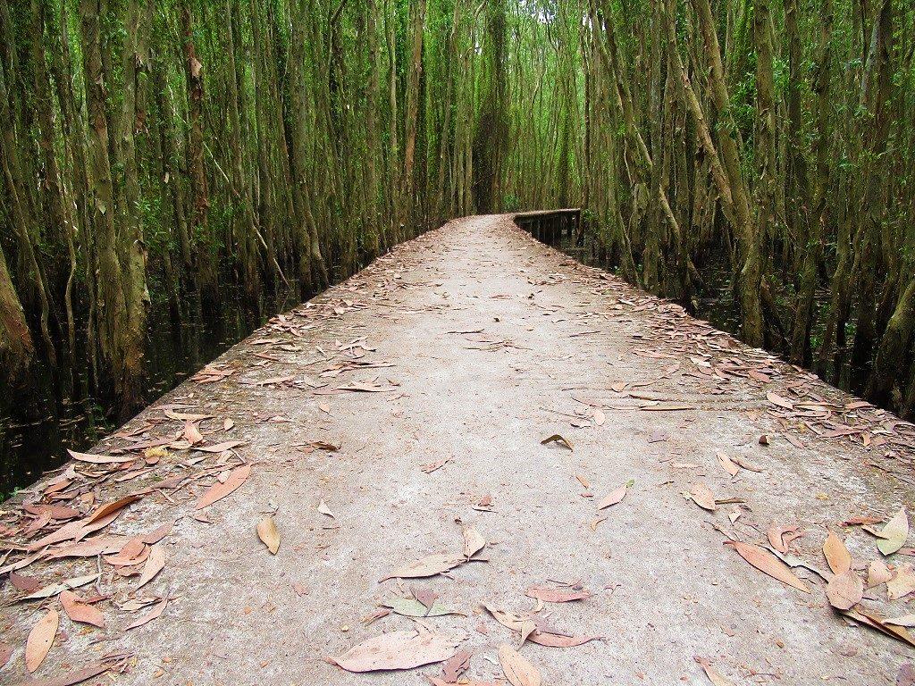Tan Lap Floating Forest, Long An, Vietnam