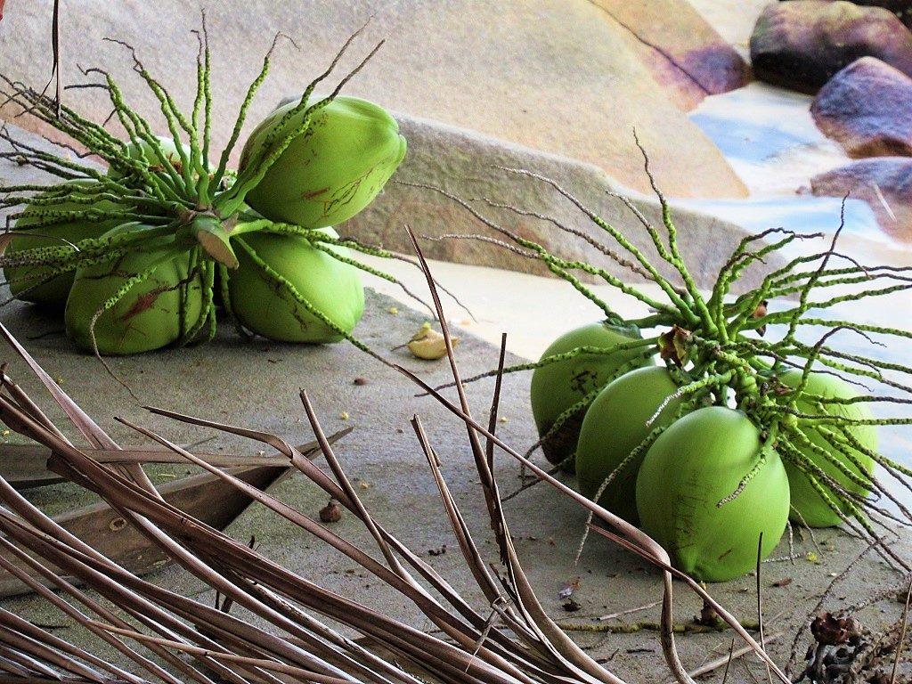 Fresh coconuts on Nam Du Island, Vietnam