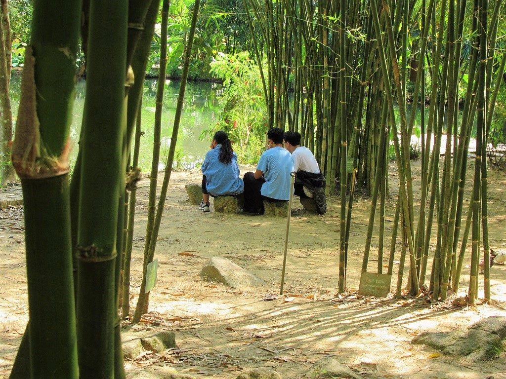 Vuon tre - Bamboo Garden - Son Tra Peninsular, Danang, Vietnam