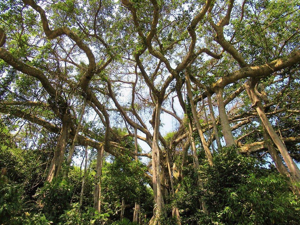 Banyan Tree, Son Tra Peninsular, Danang, Vietnam