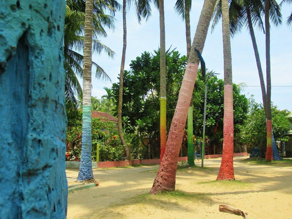 Painted coconut palms, Tam Hai Island, Quang Nam Province, Vietnam