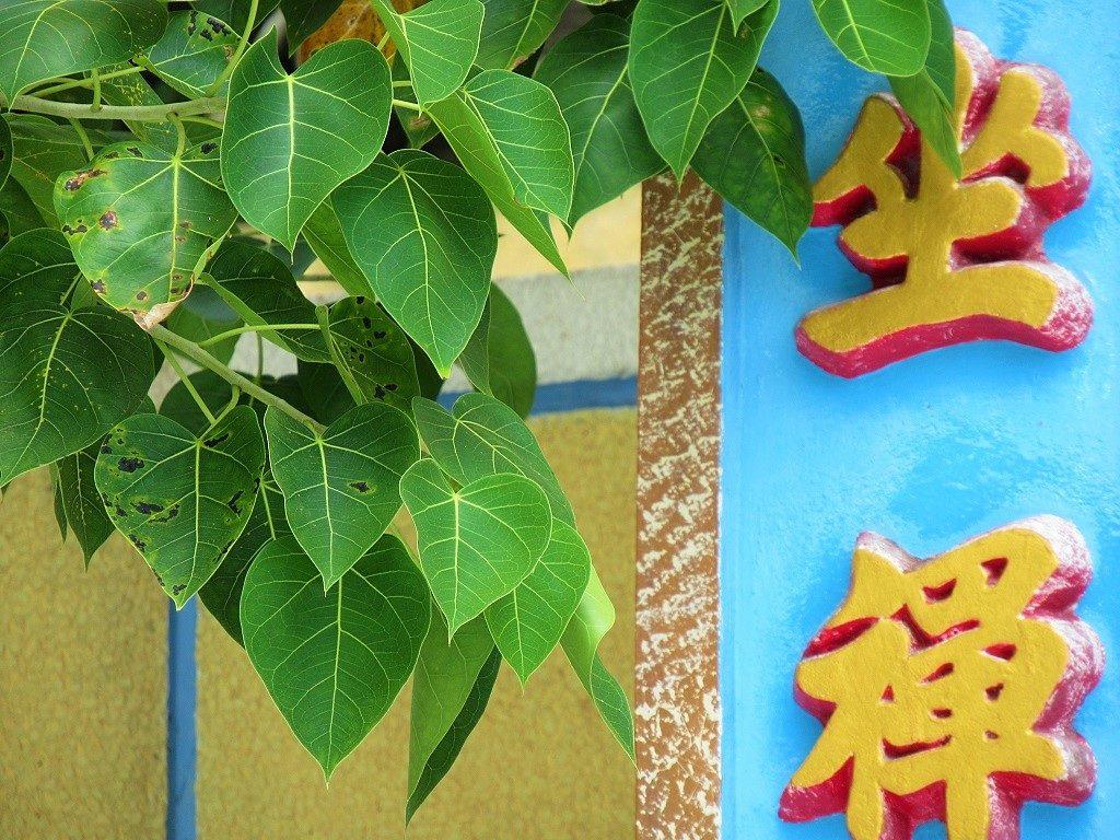 Bodhi Tree, Vietnam