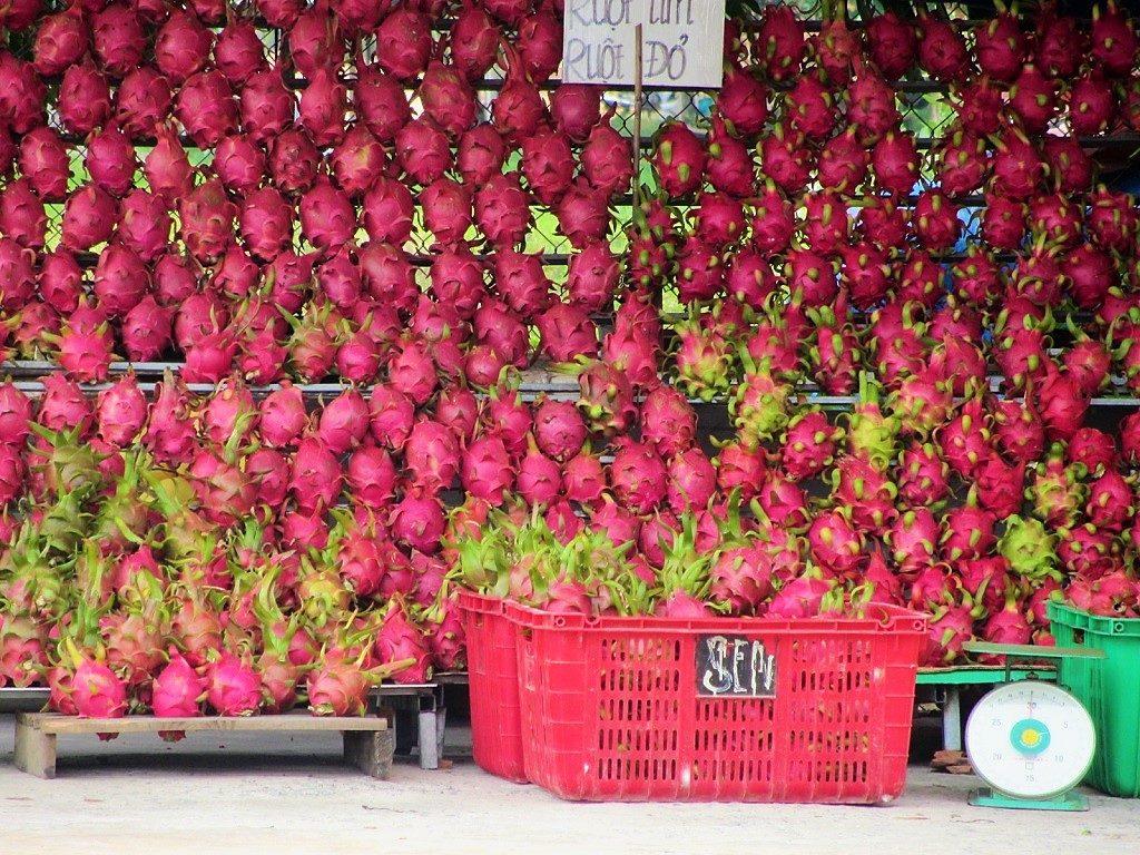 Dragon Fruit, Vietnam