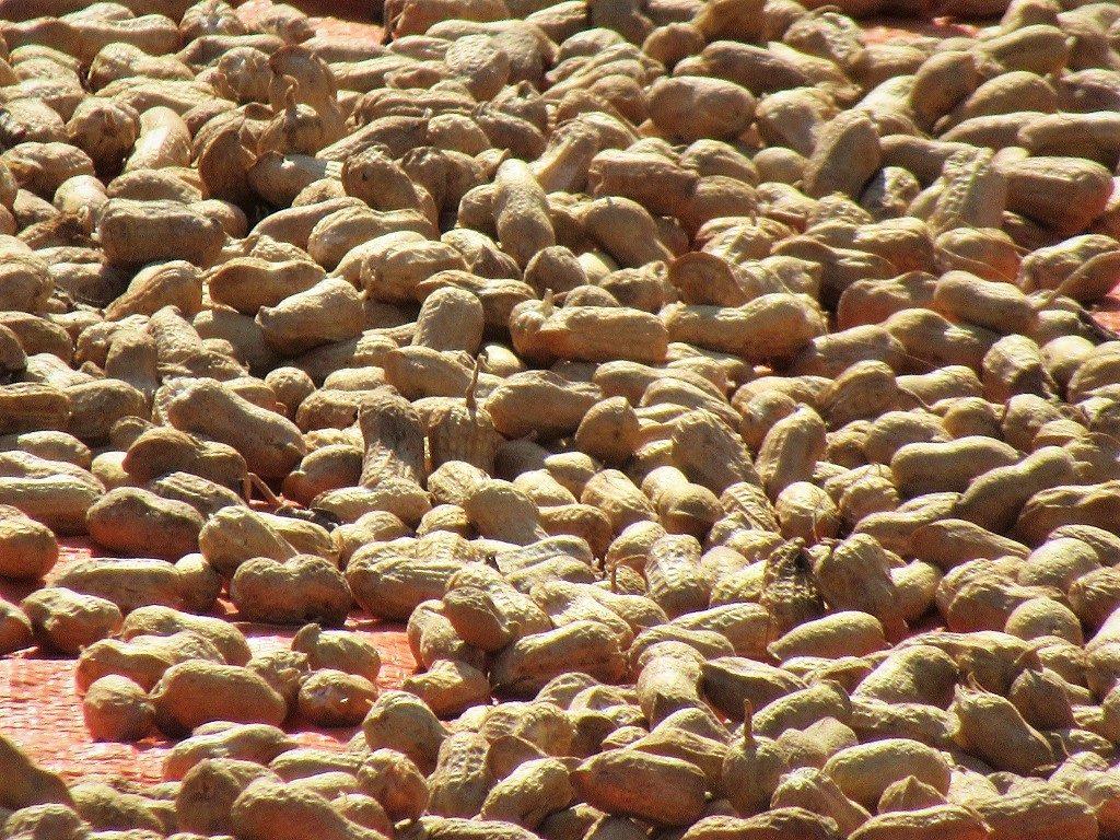 Peanuts, Vietnam