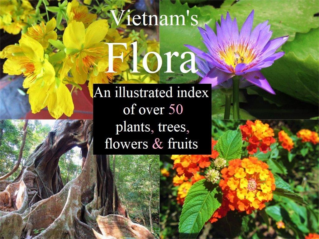 Vietnam's flora: flowers, plants, fruits & trees