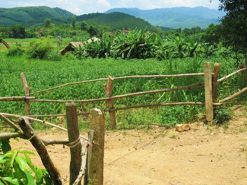Farmland, Bong Lai Valley, Phong Nha, Vietnam
