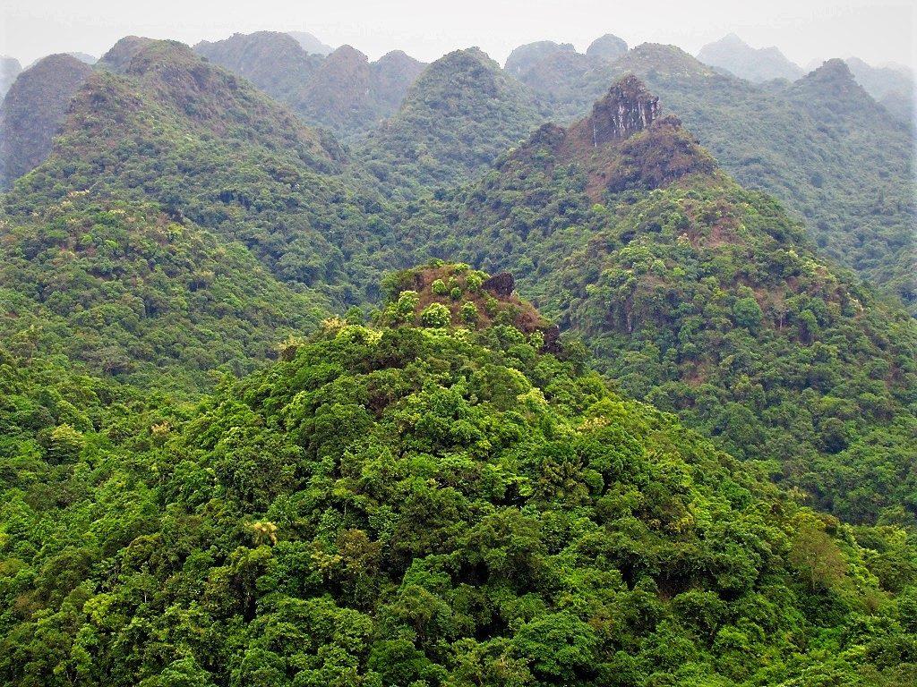 Jungles & limestone karsts, Cat Ba Island National Park, Vietnam