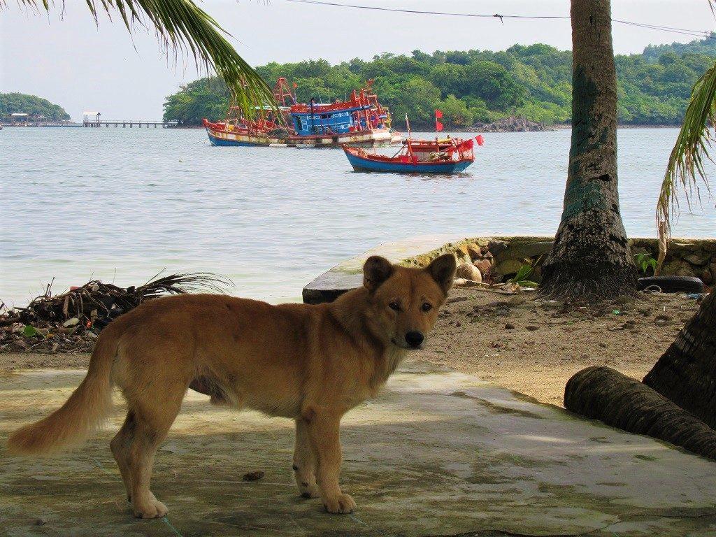 A dog on the Pirate Islands, Hai Tac Archipelago, Vietnam