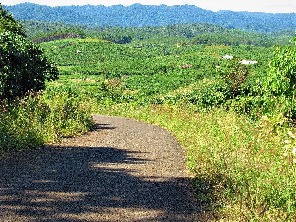 Back roads through coffee & tea plantations, Lam Dong Province, Vietnam