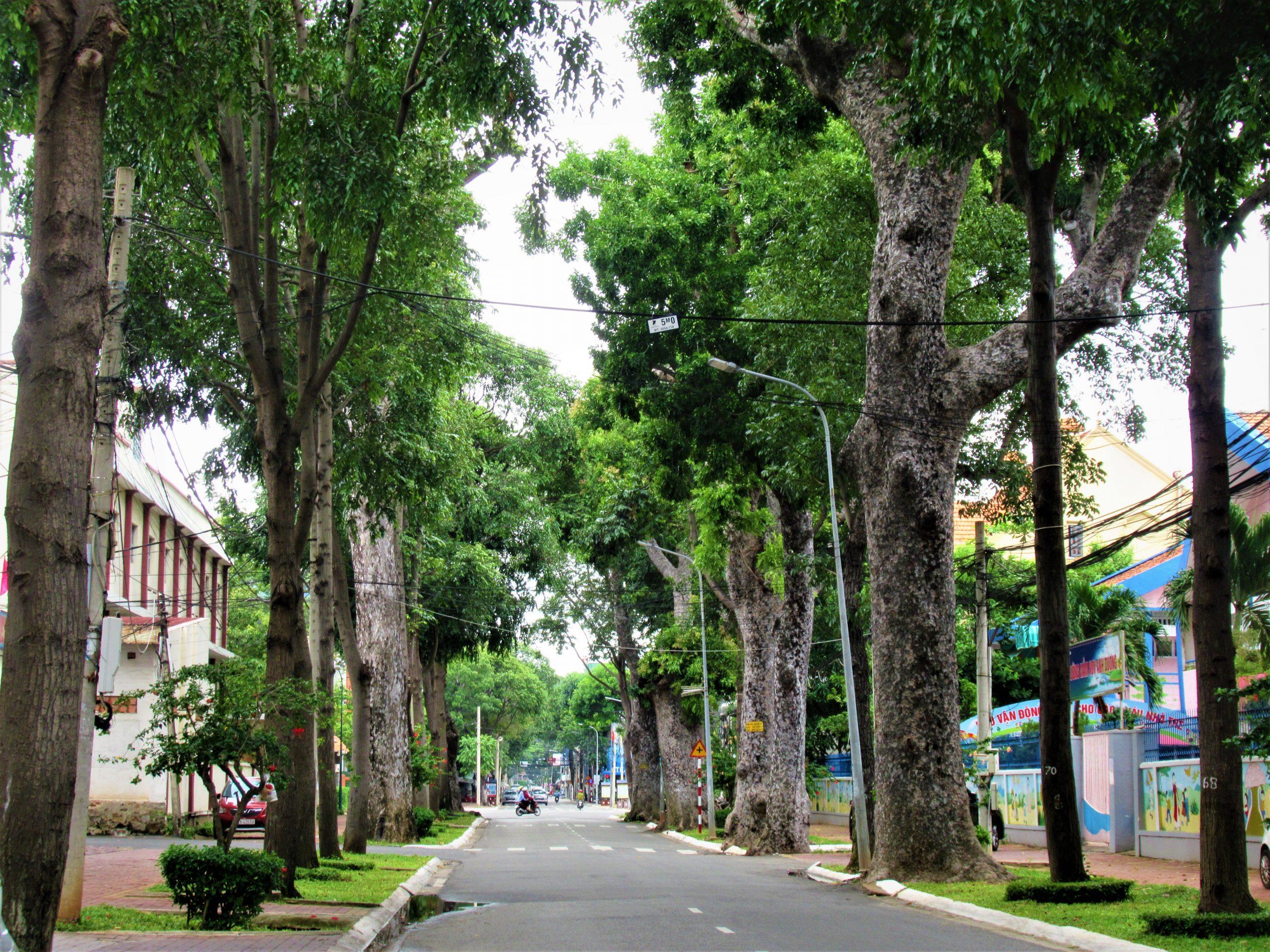 Tree-lined streets, Vung Tau, Vietnam