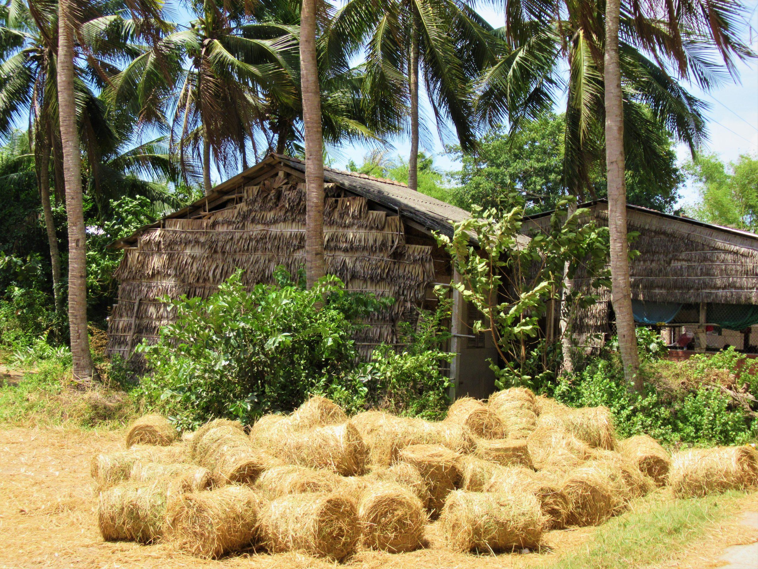Hay rolls & farmhouse, Tra Vinh Province, Mekong Delta, Vietnam