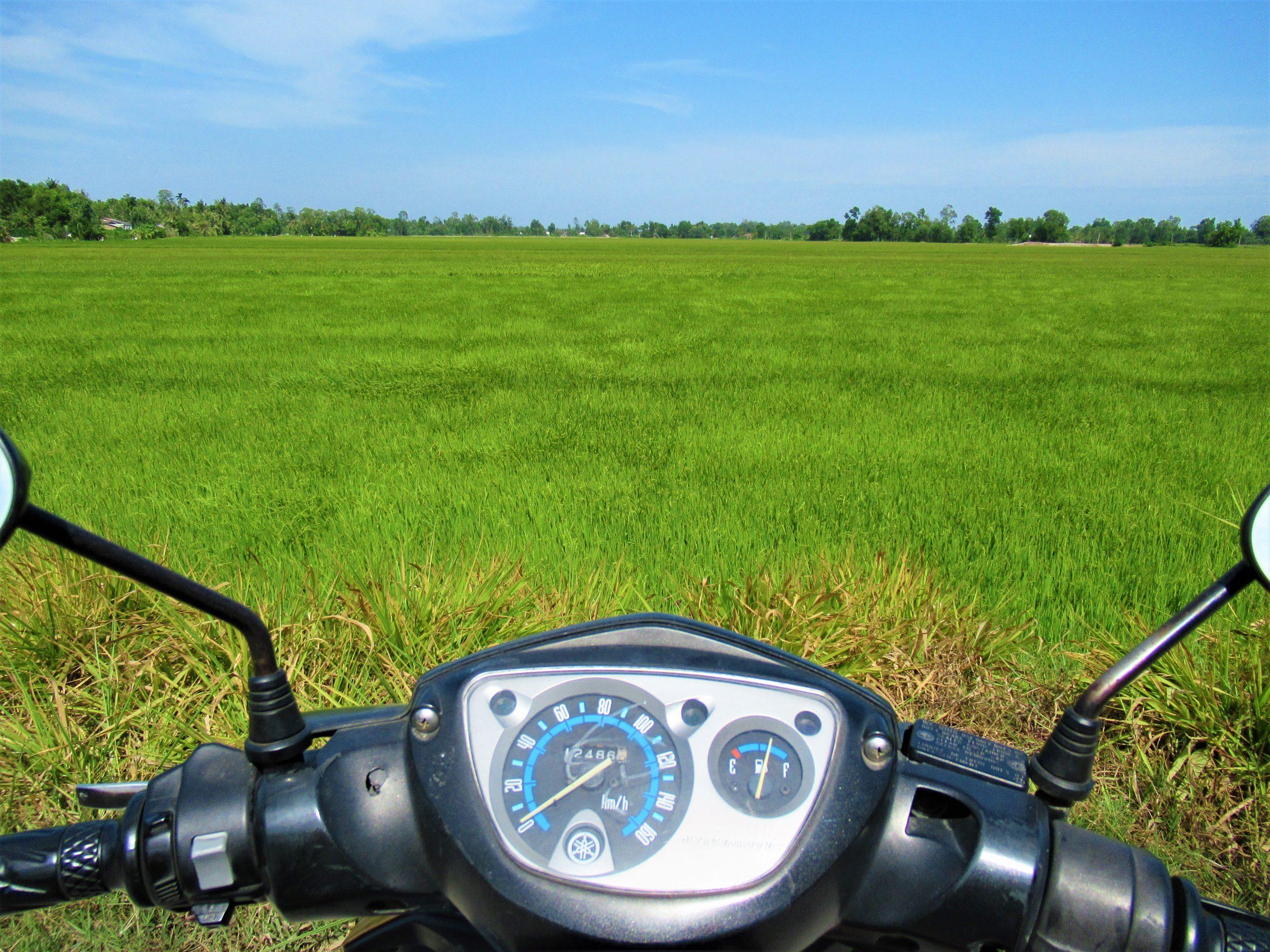 Rice fields, Tra Vinh Province, Mekong Delta, Vietnam