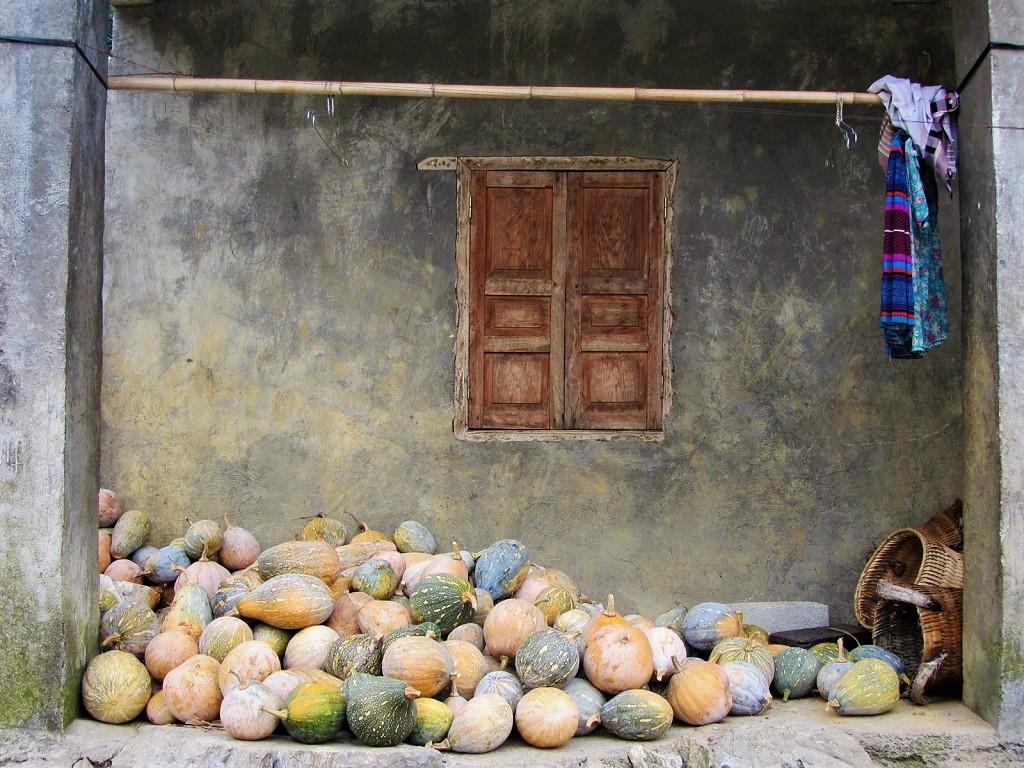 Pumpkins & squash piled outside a local home