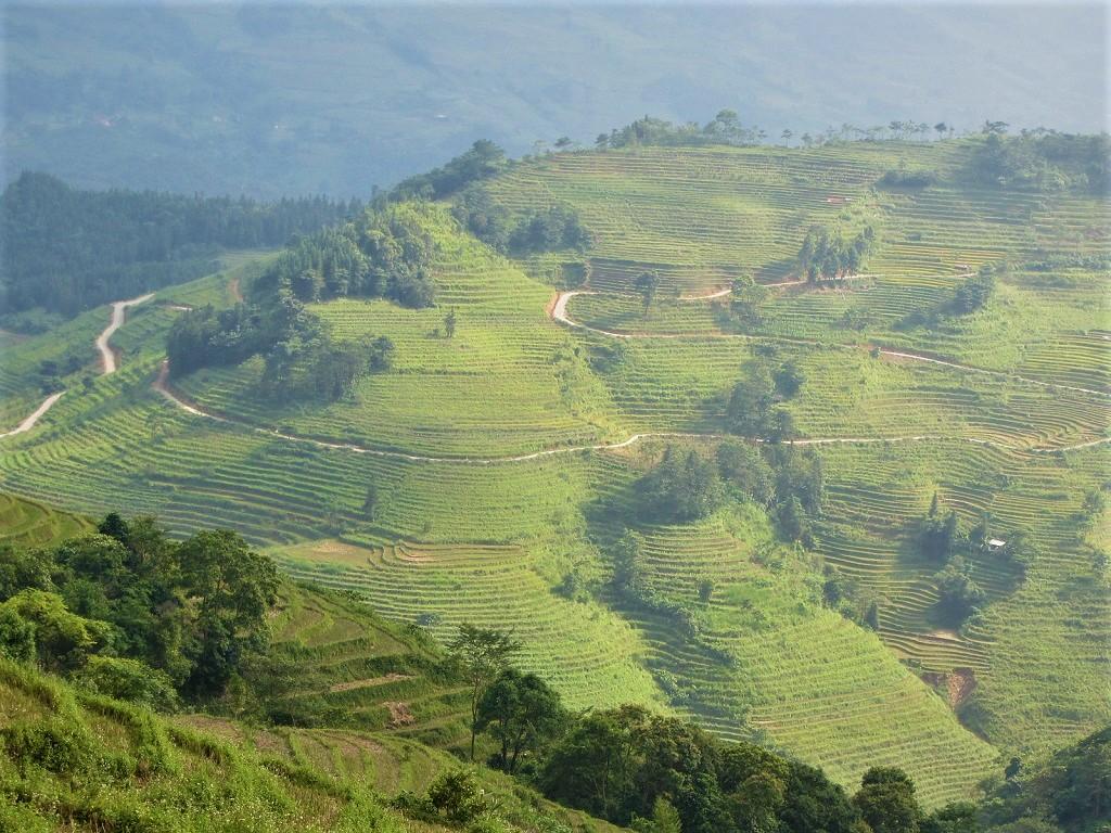 Rice terraces near Hoang Su Phi