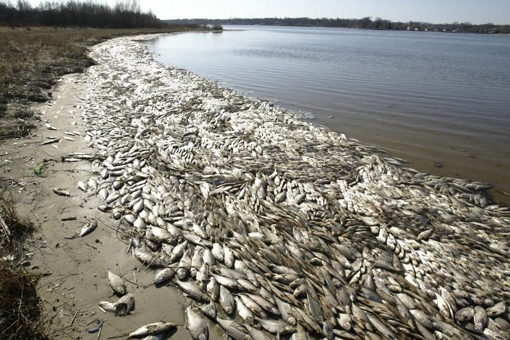 Dead fish litter the ocean, Central Vietnam